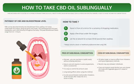 Illustration for How to Take CBD Oil Sublingually horizontal textbook infographic illustration about cannabis as herbal alternative medicine and chemical therapy, healthcare and medical science vector. - Royalty Free Image