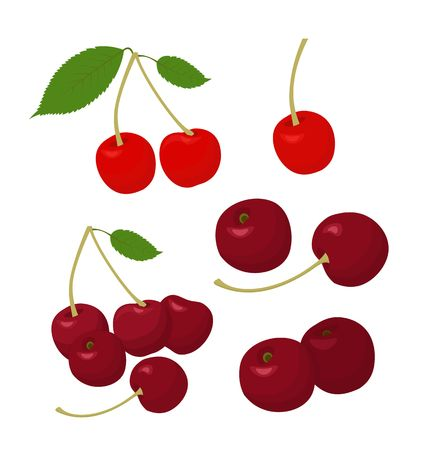 Illustration pour Cherries collection. Cherry and merry isolated on white background. Vector illustration - image libre de droit