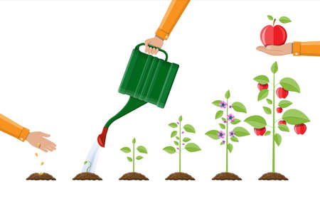 Illustration pour Growth of plant, from sprout to fruit. Planting tree. Seedling gardening plant. Timeline. Vector illustration in flat style - image libre de droit