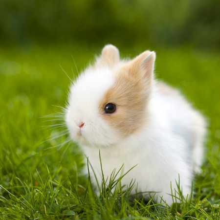 Baby rabbit sitting in grassland