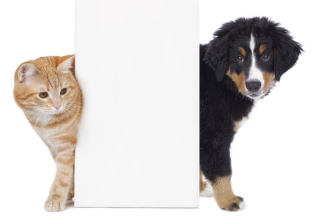 Photo pour Cat and dog looking around a white board isolated - image libre de droit