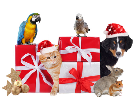 Different pets with christmas parcels isolated