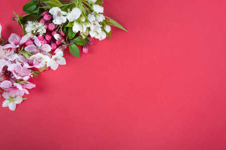Photo for spring background; fresh flower on red background. - Royalty Free Image