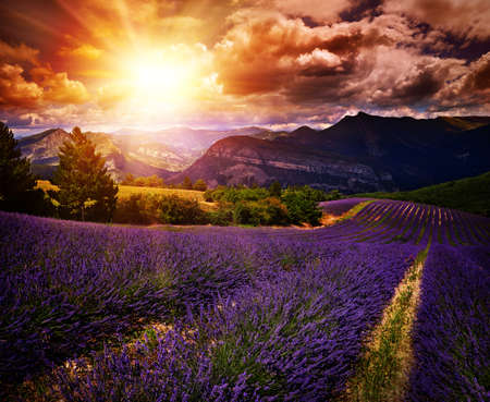 lavender field Summer sunset landscape with contrasting colors