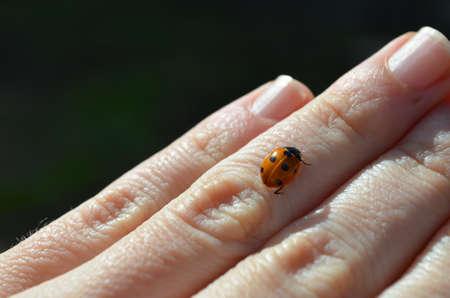 Una ladybug in my hand