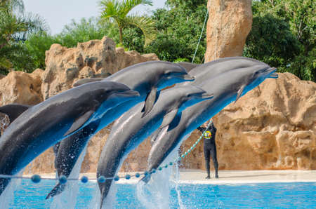 TENERIFE, SPAIN - DECEMBER 16, 2013: Show with dolphins in the pool (Loro park). Loro Parque,  Puerto de la Cruz, Tenerife, Canary Islands, Spain.