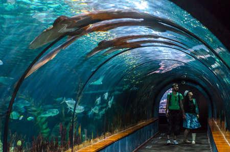 TENERIFE, SPAIN - NOVEMBER 19, 2015:  Aquatic tunnel in the Loro parque aquarium (Loro park). Loro Parque,  Puerto de la Cruz, Tenerife, Canary Islands, Spain.