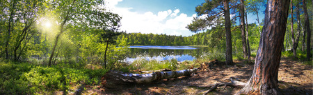 Photo pour Panoramic image of a forest on the shores of Lake - image libre de droit