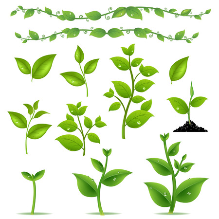 Illustration for Set Leaves And Plants With Gradient Mesh, Vector Illustration - Royalty Free Image