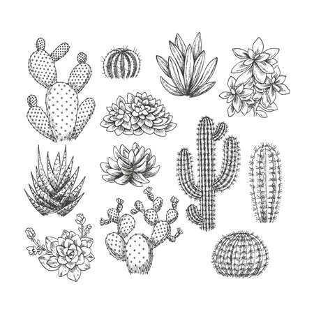 Illustration pour Cactus Succulent set collection Sketchy style illustration. - image libre de droit
