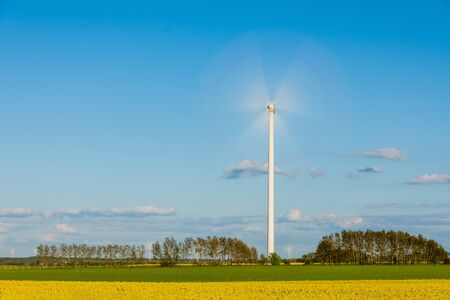 Photo for Yellow rape field with many windmills on it. - Royalty Free Image