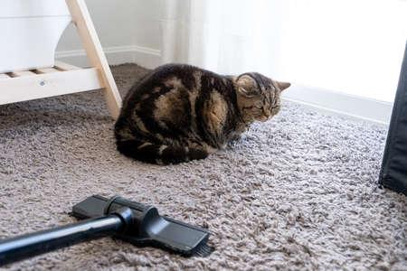 Photo pour vacuum cleaner  cat sprawled cleaning cat hair dropped - image libre de droit