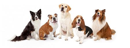 Photo pour A row of six common dog breeds for families - image libre de droit