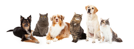 Photo pour A row of dogs and cats of different breeds - image libre de droit