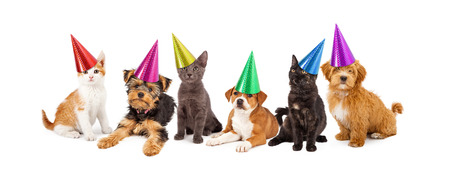 Photo for A large group of young kittens and puppies together wearing colorful party hats - Royalty Free Image