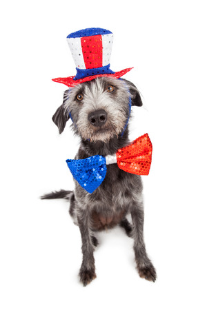Patriotic Independence Day dog sitting wearing a red, white and blue hat and bow tie