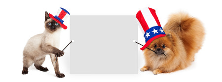 Siamese kitten and Pomeranian dog holding up a blank white sign while wearing red, white and blue American Independence Day hats