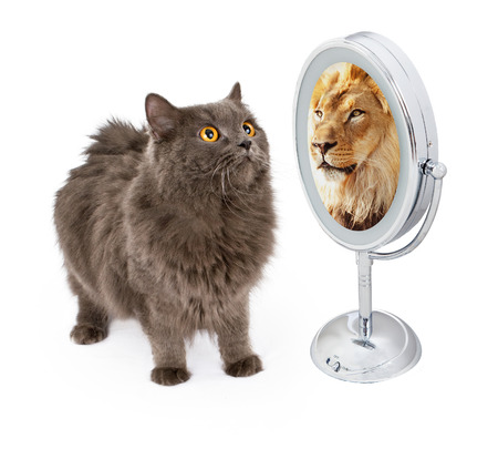 Photo pour Conceptual image of a cat looking into the mirror and seeing a reflection of a large lion - image libre de droit