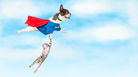 Photo pour Funny conceptual photo of super hero dog flying through clouds while rescuing a kitten - image libre de droit