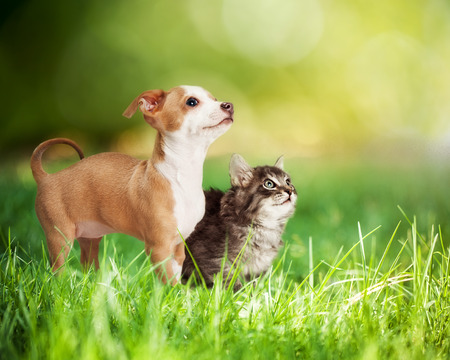 Photo pour Cute kitten and puppy outdoors in long green grass with bokeh and copy space - image libre de droit