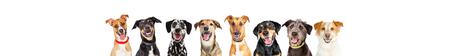Foto de Row of happy dogs in a standard 728 x 90 leaderboard with room for text - Imagen libre de derechos