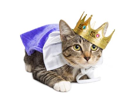 Foto de Kitten wearing prince costume - Imagen libre de derechos