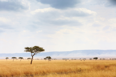 Photo pour Open grass field in the Masai Mara National Reserve in Kenya, Africa with elephants walking in the far distance - image libre de droit
