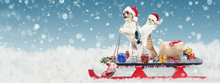 Photo for Cute funny dog and cat riding on a sleigh to deliver Christmas gifts in a snowy winter scene - Royalty Free Image