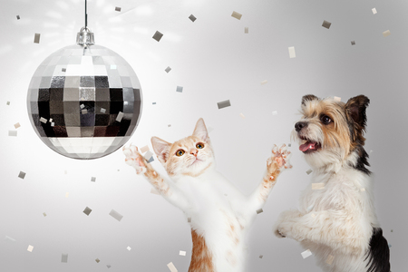Foto de Happy dog and cat dancing at New Yearr's Eve party with disco ball and falling confetti - Imagen libre de derechos