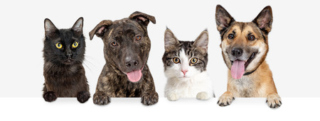Photo pour Row of dogs and cats hanging paws over blank white web banner or social media header - image libre de droit