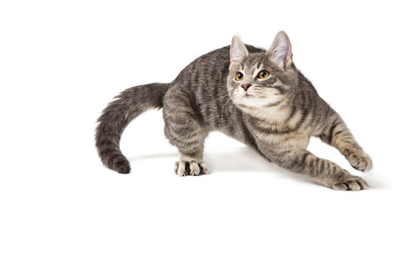 Photo for Cute funny kitten running around on white background - Royalty Free Image
