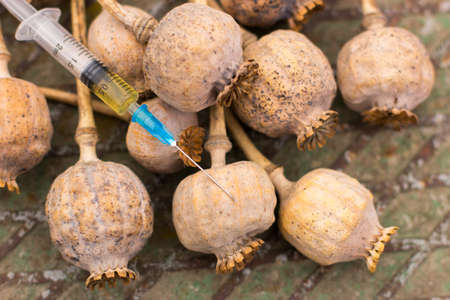 Drug opium poppy inside the syringe  Deadly drug addiction