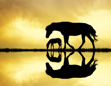 horses silhouette on river