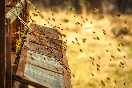Old wooden bee hive in the countryside.