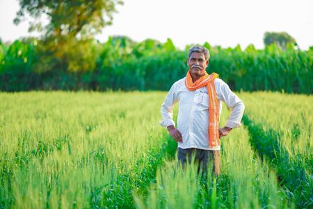 Foto de Indian farmer holding crop plant in his Wheat field - Imagen libre de derechos