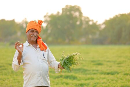 Photo pour Indian farmer at the chickpea field, farmer showing chickpea plant - image libre de droit
