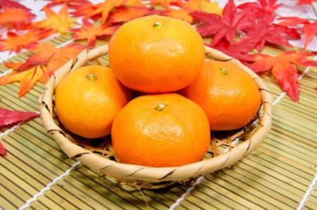 Japan produced early-maturing oranges
