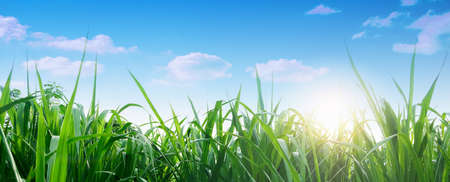 Photo pour Spring and grass background. Spring summer background with fresh green grass and blue sky in nature. Panoramic view, copy space. - image libre de droit
