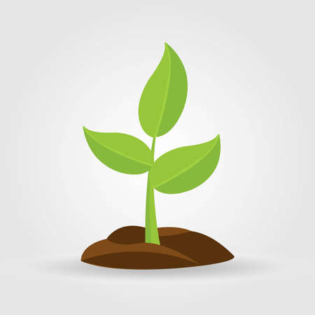 Illustration pour Growth of plant, from sprout to vegetable. Planting tree. - image libre de droit