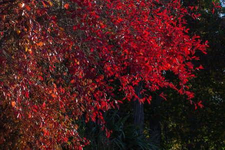 Photo pour The reds of Autumn - image libre de droit