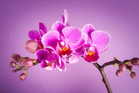 Photo pour purple orchid flowers - still life - image libre de droit