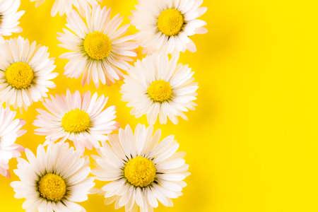 Photo pour flowers composition of daisies - close up - image libre de droit