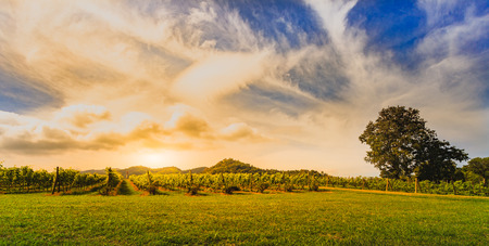 Sunset vineyard in Khao Yai thailand