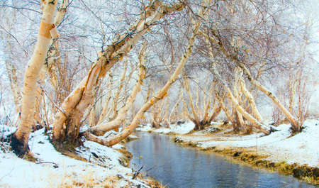 Photo pour Winter landscape. The river is not covered by ice in the woods - image libre de droit
