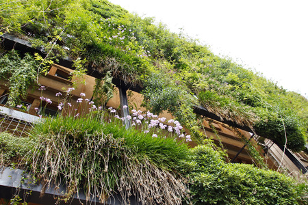 Green wall in an ecological building, sustainable architecture