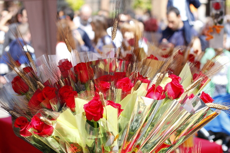 Roses in Sant Jordi day, traditional gift in Catalonia, Spain