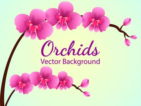 Illustration pour Branch with purple orchid flowers. Vector illustration - image libre de droit