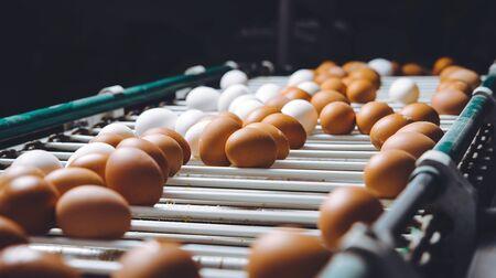 Photo pour egg factory plant agriculture poultry chicken farm - image libre de droit