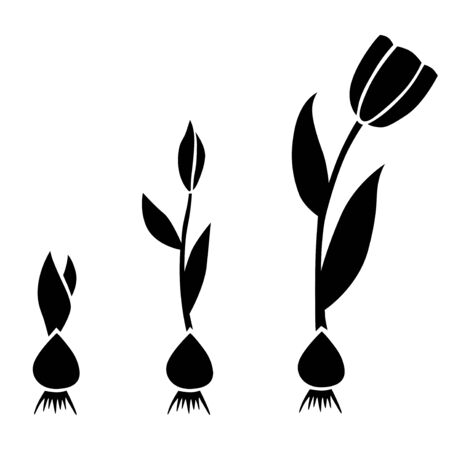 Illustration pour Vector illustrations of sprouts tulips set with bulbs - image libre de droit