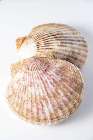 Photo pour isolated scallops on white background - image libre de droit